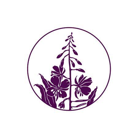 Blooming Sally or Ivan-tea. Botanical vector icon.