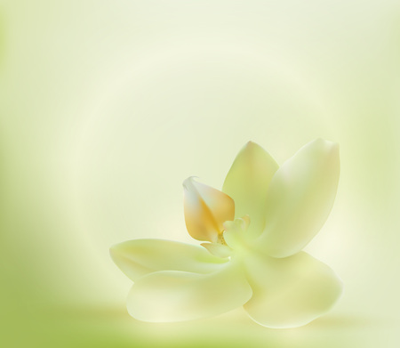 Green orchid spa flower vector