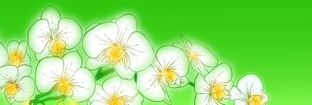 panoramic orchids white on green background