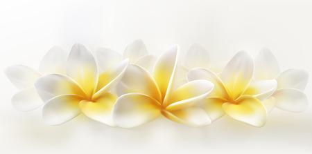 Delicate spa plumeria or frangipani on whiye background. Horizontal realistic vector illustration