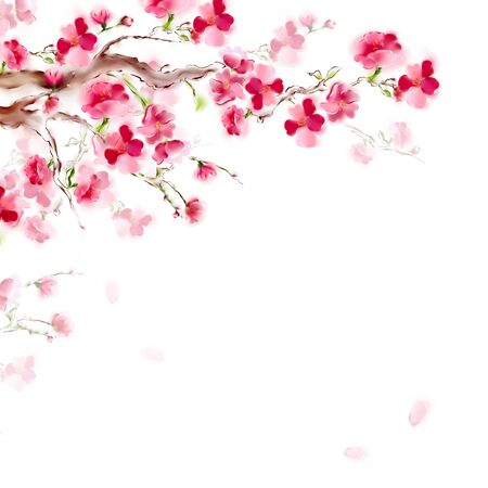 Blooming sakura japan cherry branch with pink flowers. Spring sakura card design. Isolated on white background. Archivio Fotografico