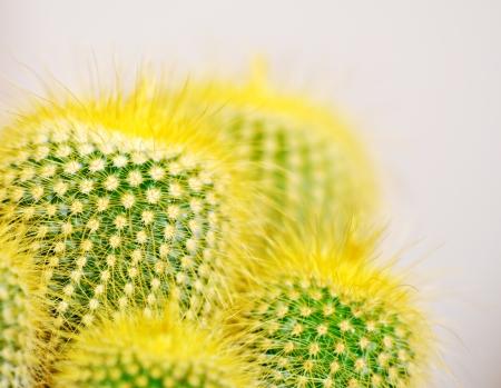 Cactus close up Stock Photo - 17350001