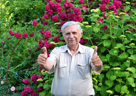 An elderly white-haired man in a garden on a background of rose bushes raised thumbs up Stock Photo - 17406414