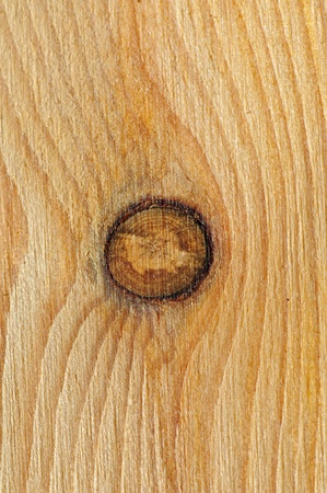 Pine wooden texture whith a knot photo