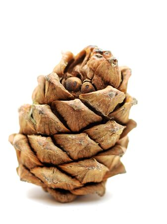 Siberian pine cedar cone on white Stock Photo - 17349648