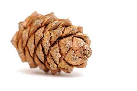 Siberian cedar cone whith shadow on white Stock Photo - 17349639