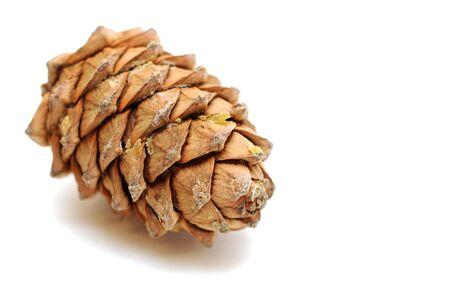Cedar pine cone Stock Photo - 17349640