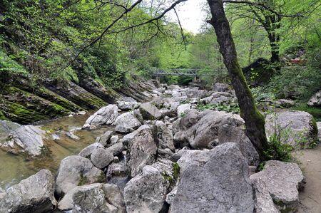 Agura river landskape, Sochi National Park, Russia Stock Photo - 17399982