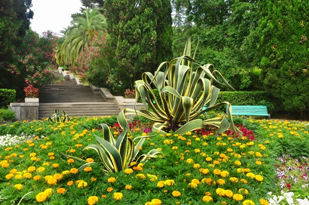 Flowers in the beautiful tropical park, Sochi arboretum Stock Photo - 17404549
