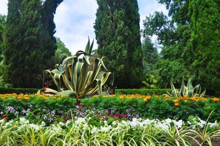 Flower bed in Sochi arboretum photo