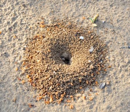 Sabbia formicaio di scavo formiche nere Lazius
