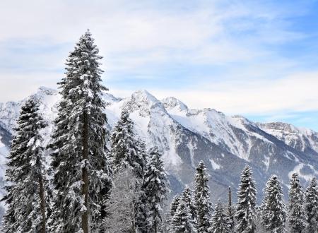 Montagna invernale e boschi di abeti Archivio Fotografico