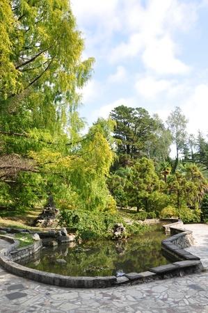 Pond in the Sochi arbotetum photo