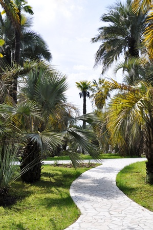 Palm trees in a southern tropical park Stock Photo - 17529103