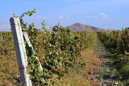 Vineyards in the mountains of Armenia, Lusarat village Stock Photo