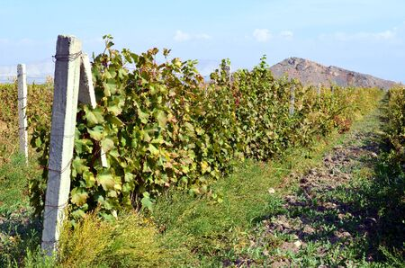 Vineyards in the mountains of Armenia Stock Photo