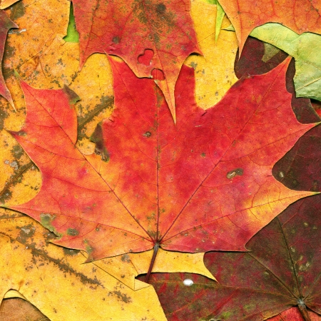 Autumn leaves background, high detail close up photo