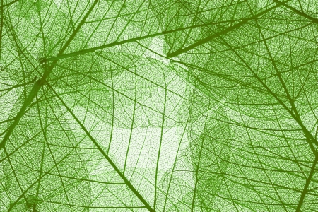 Transparent leaves background, high detail