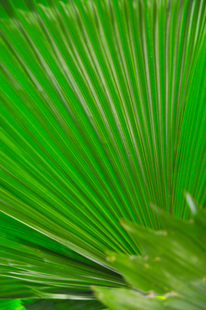 Line and shadow on bright green leaves background