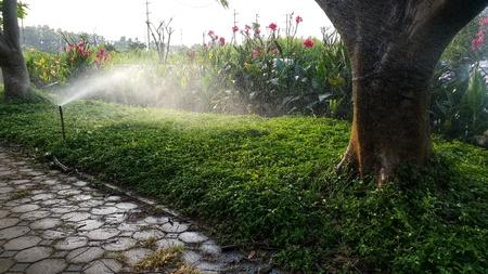 springer feeding water in garden ,everning time Archivio Fotografico
