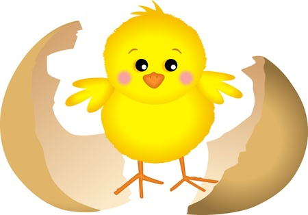 Little chick Vector