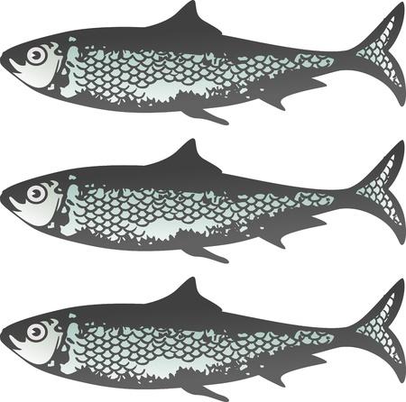 Sardinas frescas Ilustración de vector