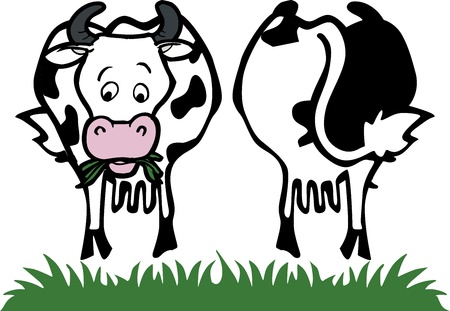 Cow front and back Vector