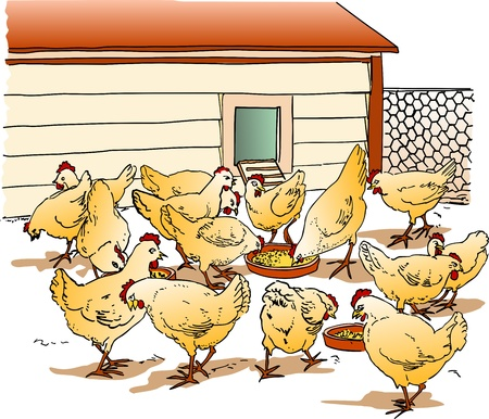 aviary: Chicken Coop