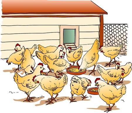 carne de pollo: Gallinero Vectores
