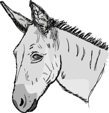 Sketch donkey head Vector