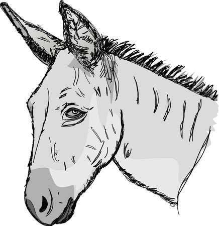 Sketch donkey head Vector
