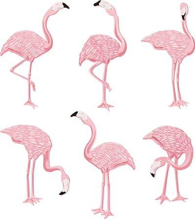 flamingi: Flamingi Różowy Ilustracja