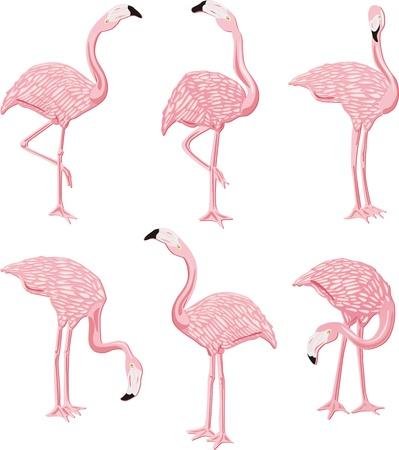 flamenco ave: Pink Flamingos