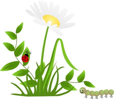flower ladybug: Flower Ladybug Centipede Illustration