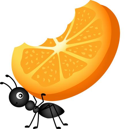 hormiga: Hormiga que lleva rodajas de naranja Vectores