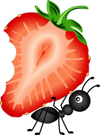 hormiga: Hormiga Llevar fresa en rodajas