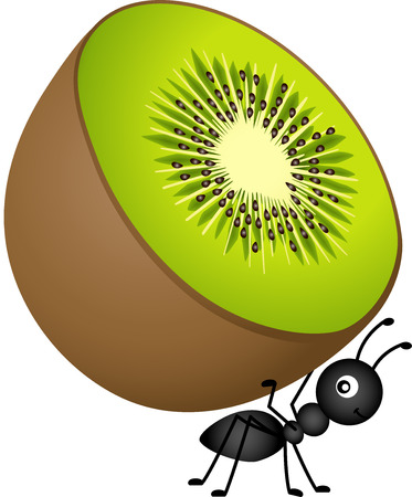 Ant Carrying Kiwi Vector