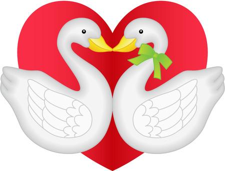 swans: Pareja Cisne en el amor