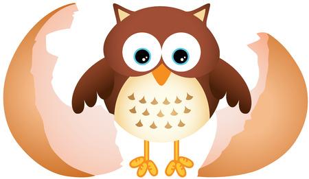 Little Owl 版權商用圖片 - 39890875