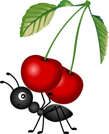 hormiga: Hormiga que lleva un cerezas rojas