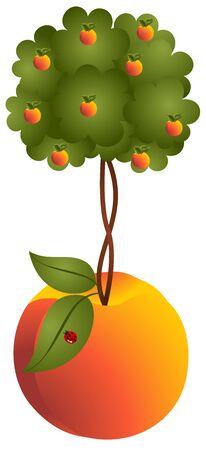 peach tree: Peach tree in a peach