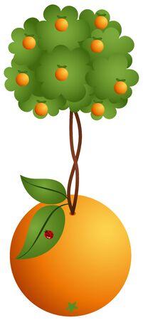 tillage: Albero arancione in arancione