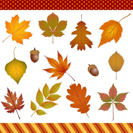 feuilles arbres: Les feuilles d'automne cliparts numérique Illustration