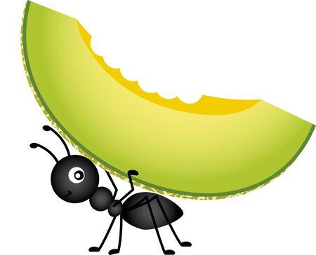 hormiga: Hormiga cargando un melón cantaloupe Vectores