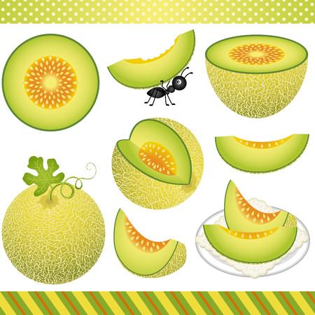 digital: Cantaloupe Melon Digital Clipart
