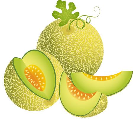 Juicy Cantaloupe Melon
