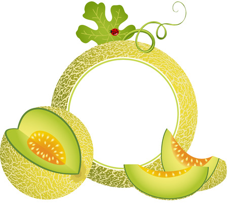Cantaloupe Melon Photo Frame 向量圖像