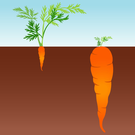 debauch: Large and small carrot