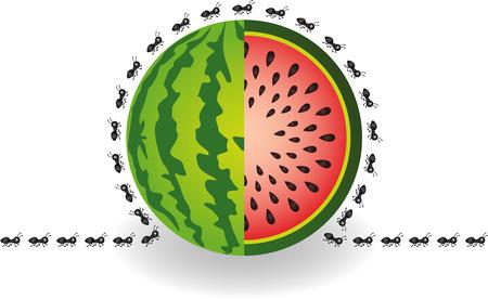 hormiga caricatura: Las hormigas alrededor de la sandía Vectores