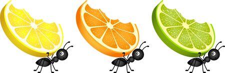 citrus fruit: Ants carrying citrus fruit slices